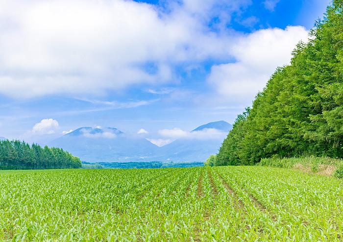 農地法許可申請業務
